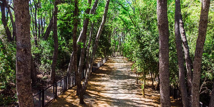 Proyecto Bosques de Lircay de Inmobiliaria Independencia